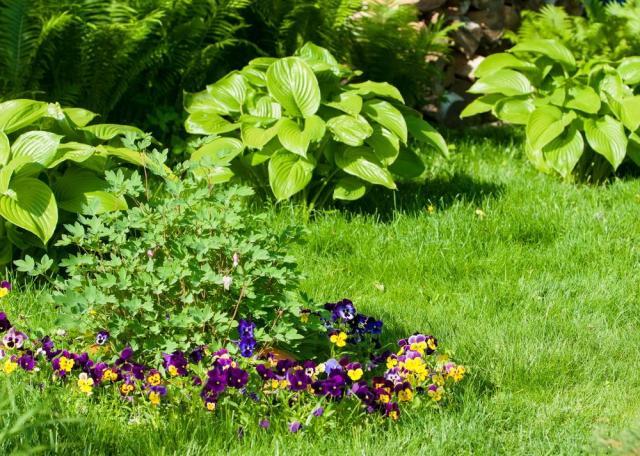 Wiosenne sadzenie bylin – odmiany, pielęgnacja i nawożenie