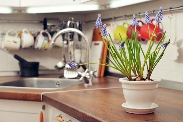 5 skutecznych sposobów na muszki owocówki w domu