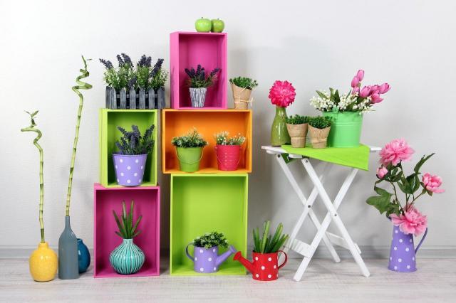 5 domowych roślin, które kochają zimę!
