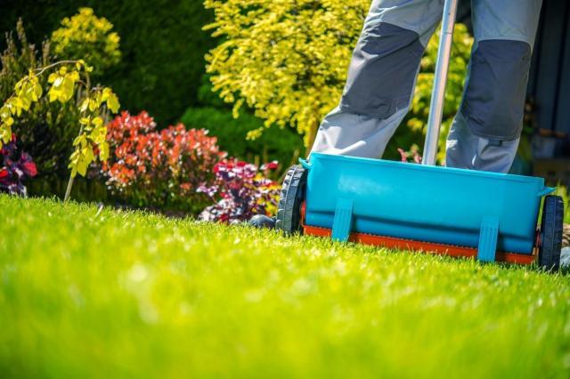 ogród, trawnik, artykuł sponsorowany