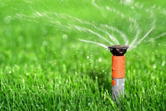 trawnik, artykuł sponsorowany, ogród