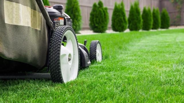artykuł sponsorowany, ogród, trawnik
